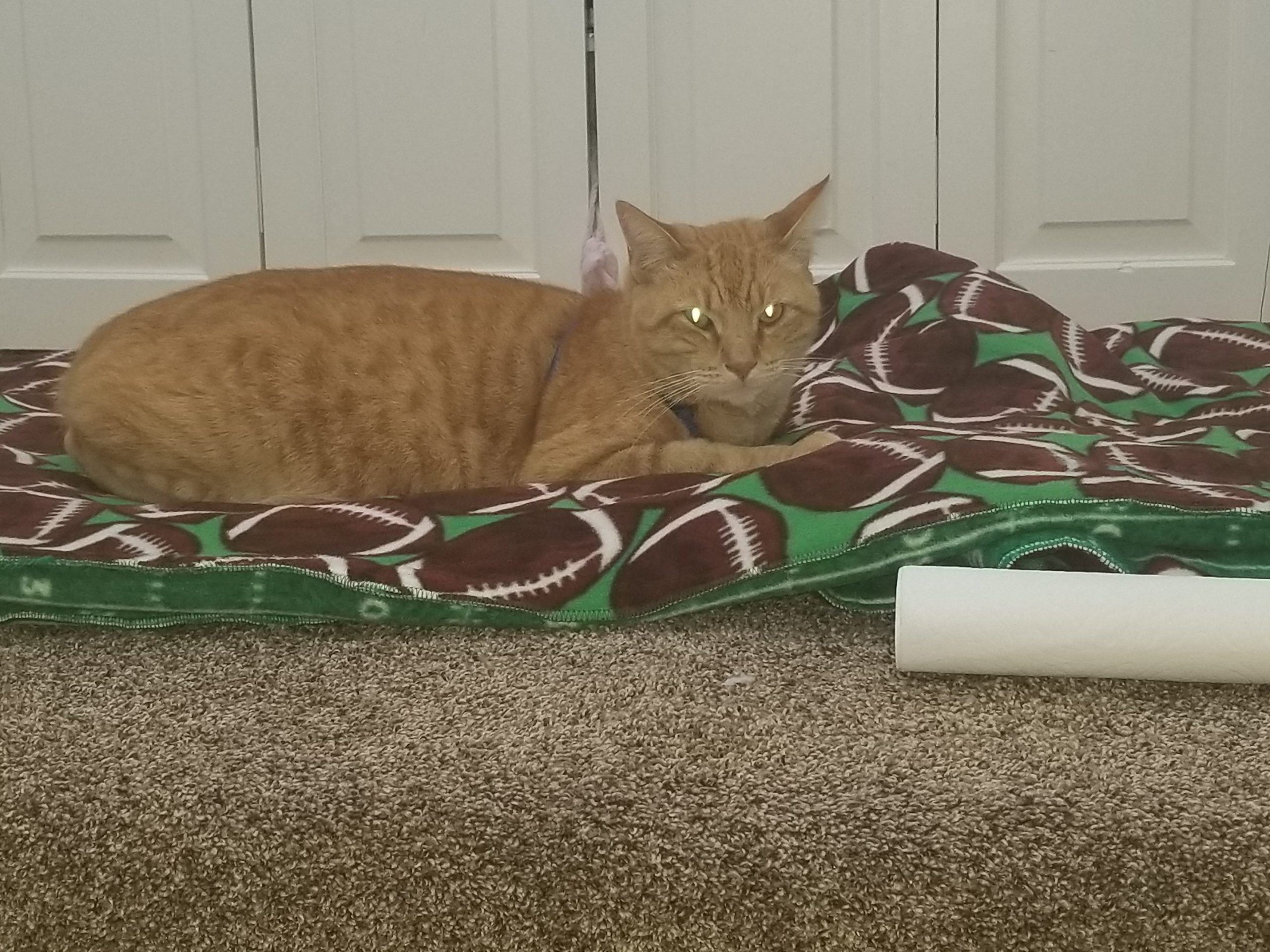 Jase, the male orange tabby cat, lounging out on a Football field fleece throw
